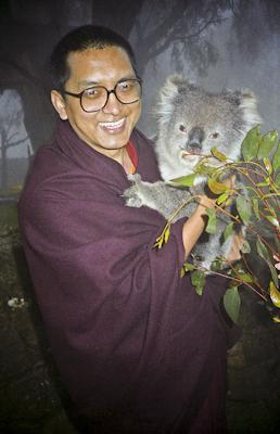 Lama Zopa Rinpoche with koala in Adelaide, Australia, 1983. Photo: Wendy Finster.