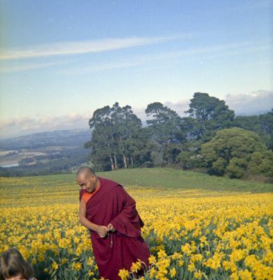 Lama Yeshe visiting a daffodil farm near Melbourne, Australia, 1976.